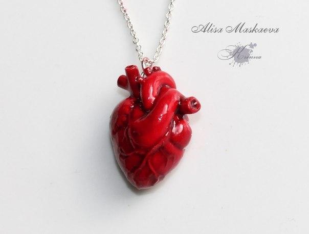 Анатомическое сердце картинки 10