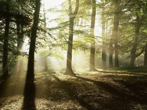 Лес в разное время года