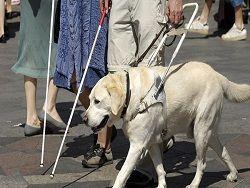 Опыты на мышах показали: слепота излечима