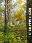Осенний фотоконкурс F85e0c8f629f3647c489317df214e60c