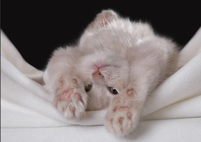 доброго утра я скучаю фото котов