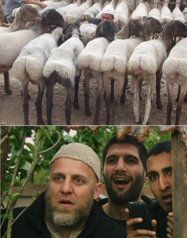 Мужским, картинки смешных кавказцев
