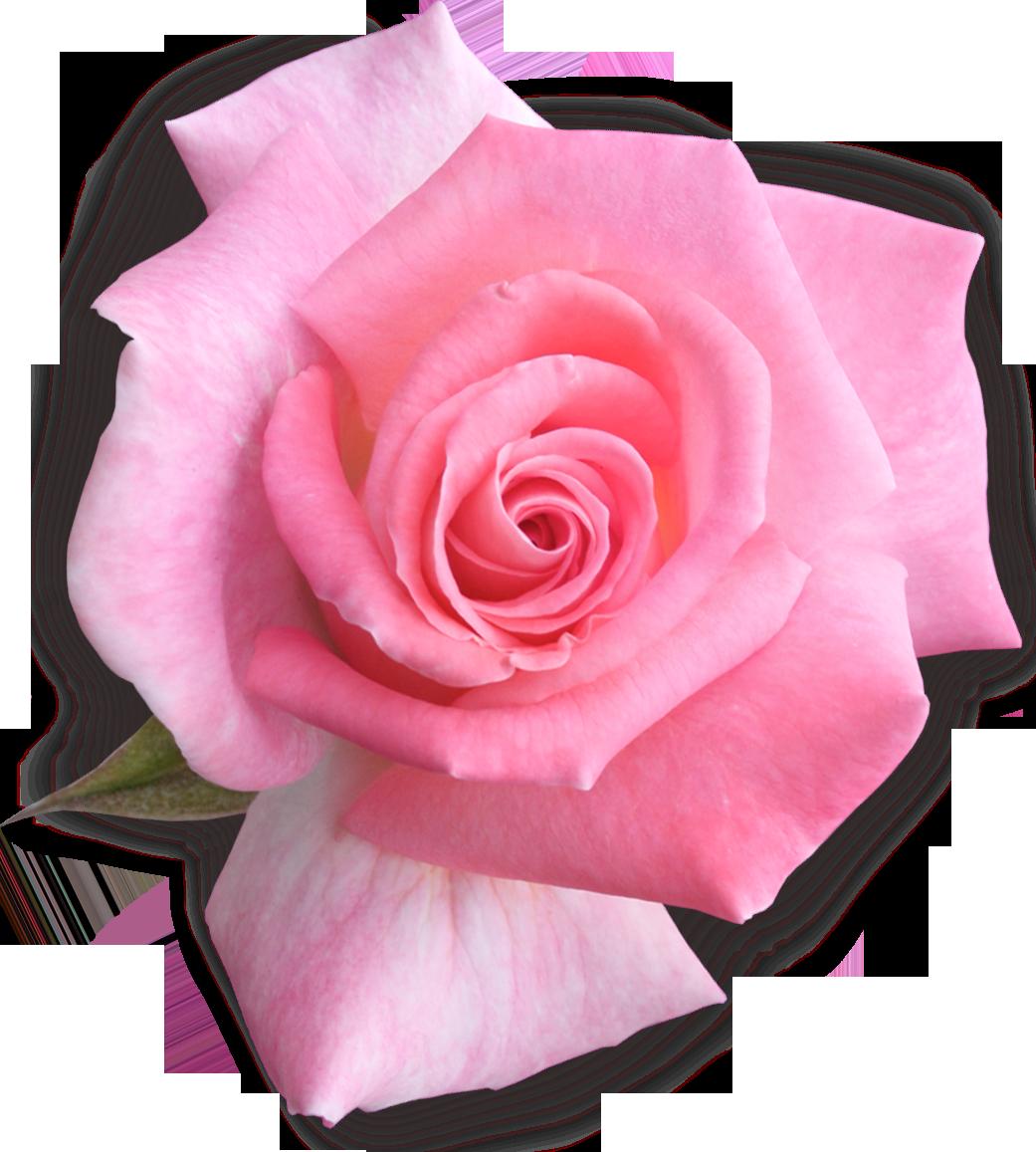 Картинки детские розового цвета